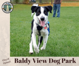 Baldy View Dog Park