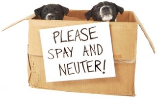 Spay & Neuter Your Pet