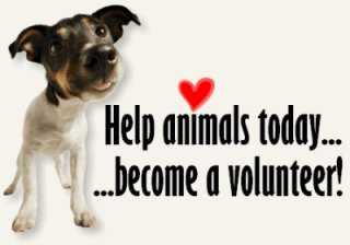 Volunteer with Friends of Upland Animal Shelter